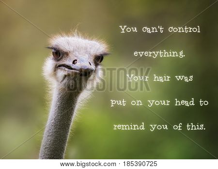 Comical ostrich looking at the camera. Motivational quotation saying You cant control everything. Your hair was put on your head to remind you of this.