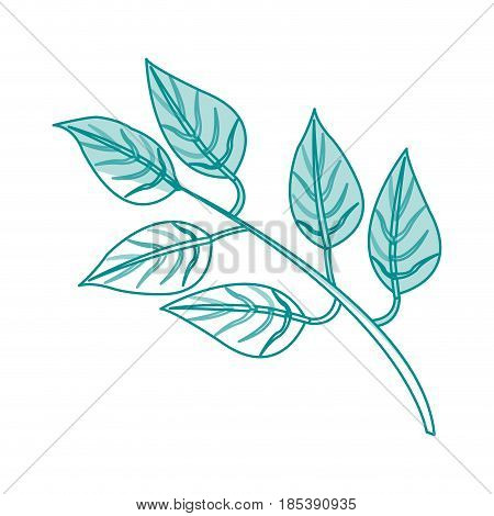 blue silhouette image side view branch with ramifications and leaves vector illustration