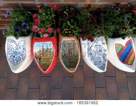 Dutch wooden clogs with blooming flowers close up