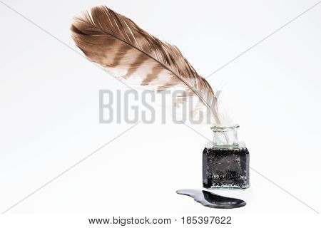Old writing feather in the black ink pot