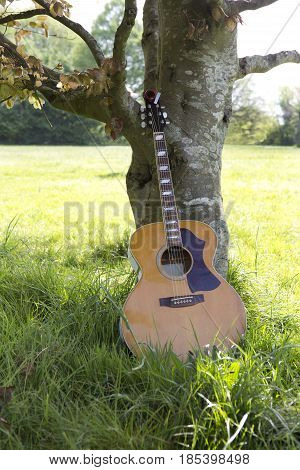 An acoustic guitar leaning up against a tree in the sunshine