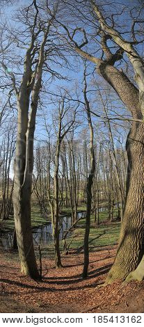 Vertical Panorama Of Nature Reserve Heithoern Around Hanshaeger Bach (hanshagen Stream) In Mecklenbu