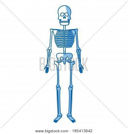 skeleton human body bones medical vector illustration