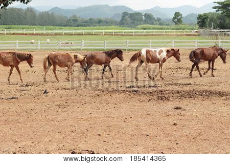The herd of horses in the farm