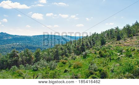 Jerusalem's forests and hills. Landscape. Magnificent panoramic picture