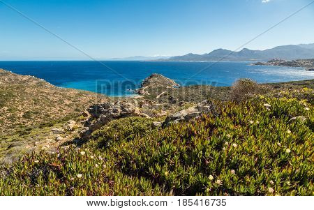 Flowers amongst the maquis and rocks of Revellata on the west coast of Corsica with the citadel of Calvi and snow capped mountains in the distance and deep blue sky and Mediterranean sea