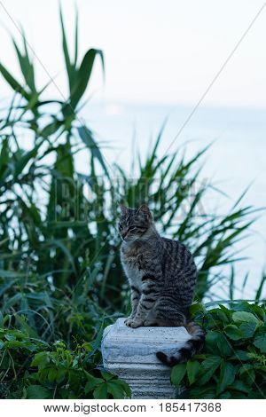 Gray striped cat sitting on stone column pillar with blurred plants behind it