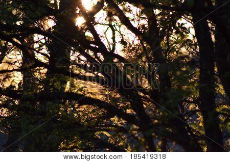 nature, trees, wildlife, animals, birds, bark, limbs
