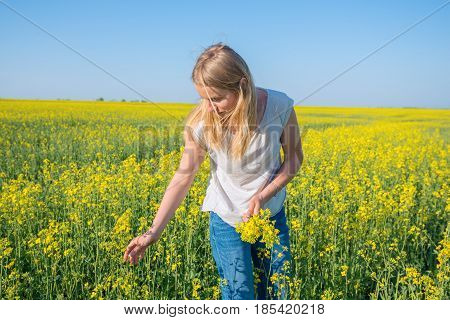 Cute Girl, Blonde Collects Yellow Flowers In A Field Under A Blue Sky