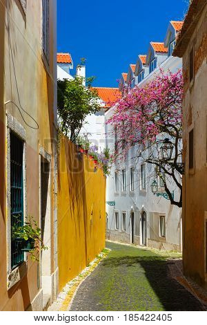 The typical Lisbon street with flowering spring tree in Alfama, Portugal