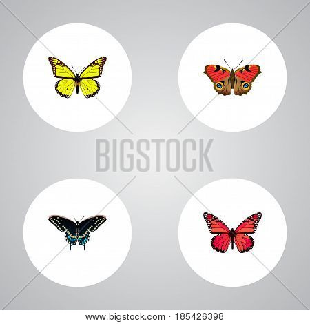 Realistic American Painted Lady, Archippus, Morpho Hecuba And Other Vector Elements. Set Of Beauty Realistic Symbols Also Includes Blue, Monarch, Pink Objects.
