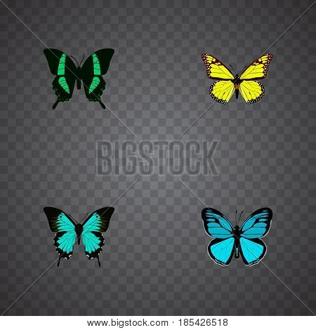 Realistic Sky Animal, Beauty Fly, Archippus And Other Vector Elements. Set Of Beauty Realistic Symbols Also Includes Monarch, Tropical, Hairstreak Objects.