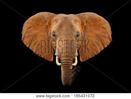 Head Elephant On A Black Background