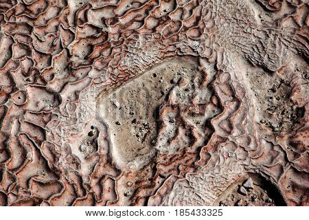 Dry ground with cracks covered with salt