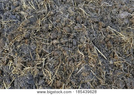 Horse manure and straw bedding material spread over a vegetable garden in autumn to condition and fertilize soil.