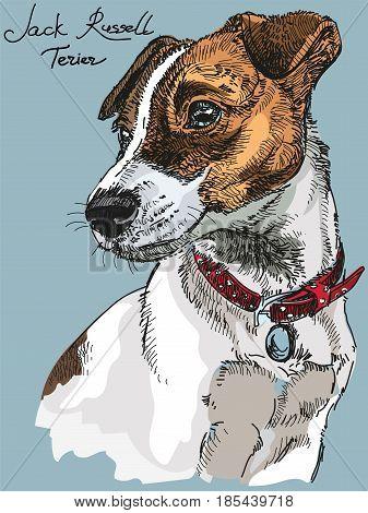 Colorful Vector Portrait of dog Jack Russel terrier hand drawing Illustration on blue background