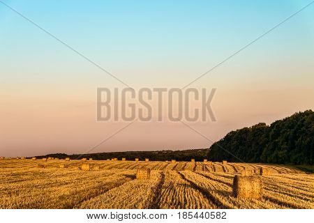 Evening summer field with more straw bales. Farmland with hay rolls.