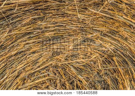 Bale of straw close-up. Vegetable texture roll of hay agricultural fodder billet.