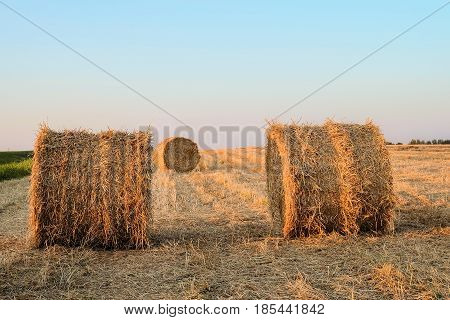 Straw bales. Summer field with hay rolls.