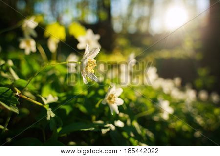 Spring awakening of flowers and vegetation in the summer park on the background of setting sun
