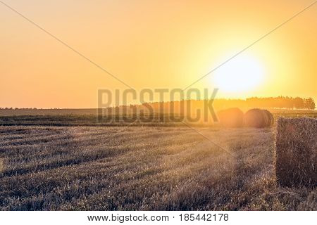 Evening summer sunny field with straw bales. Farmland with hay rolls. Rural landscape in light of the low evening sun backlight.