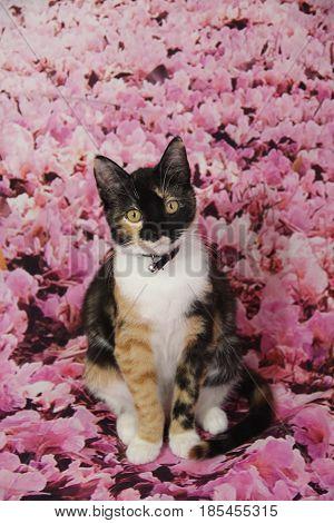 A calico cat crashed my photo shoot