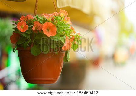 flowers in a pot hanging on a clothesline