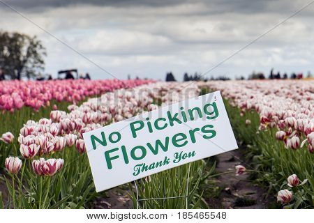 A No Picking Flowers sign in a Tulip field.