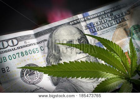 Money and Marijuana Leaf Close Up High Quality