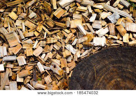 Pedaços de madeira também servem para decoração!