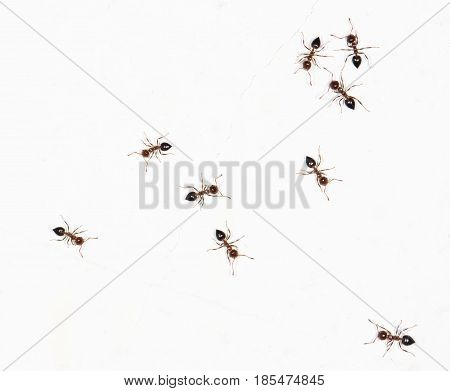 ants on a white wall. close-up . A photo
