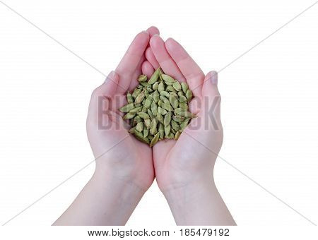 Dry Aroma Cardamon On Women Hands Isolated On White Background