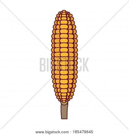 white background with corncob in close up and thick contour vector illustration