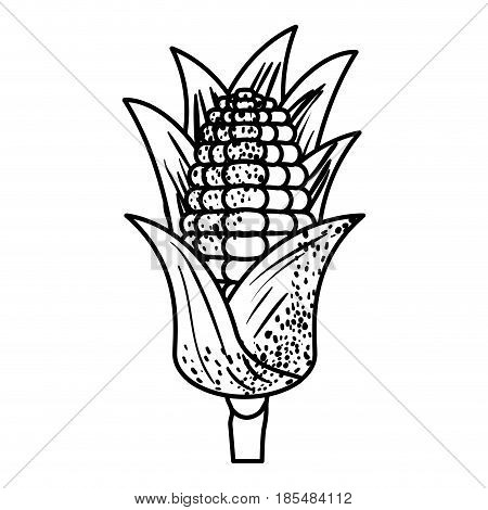 black silhouette of corn cob with leaves vector illustration