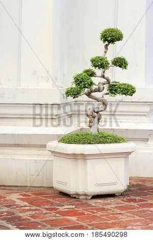 shaped decorative green tree in Thai temple