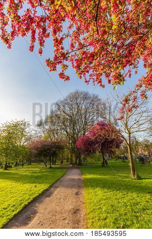 Walkway And Blossomed Trees, Whitworth Park, Manchester, Uk