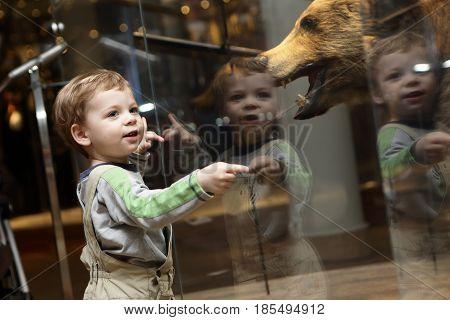 Curiosity Kid In Museum