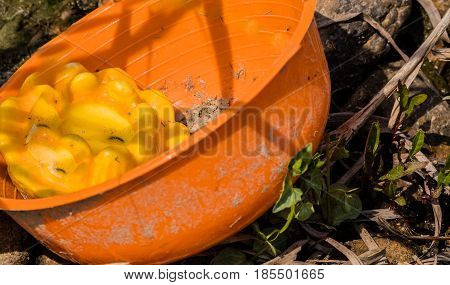 Closeup of dirty orange plastic bowl discarded in a woodland area