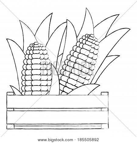 monochrome blurred silhouette of wooden box with corncobs in closeup vector illustration