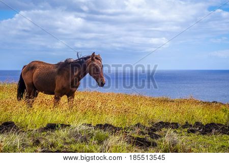 Horse On Easter Island Cliffs