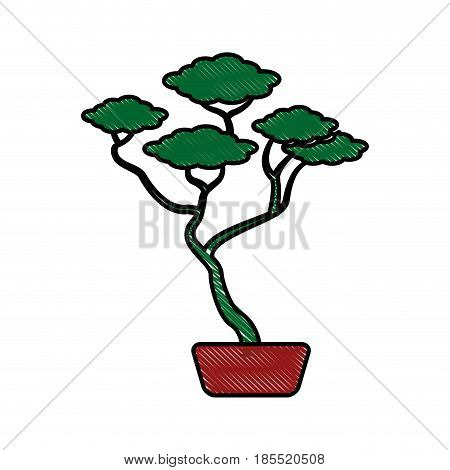 drawing bonsai tree ceramic pot botanical vector illustration