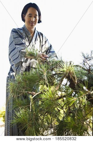 Mixed race man pruning tree wearing Japanese kimono