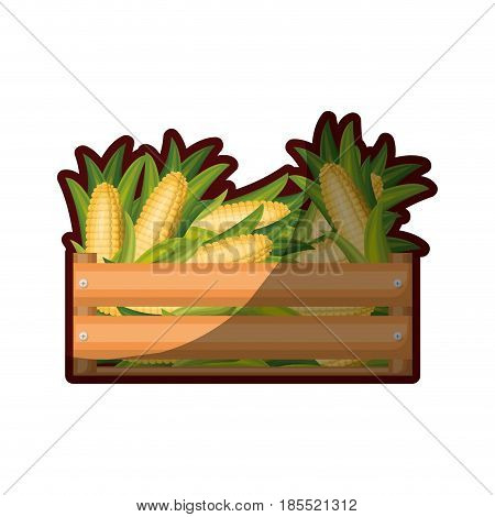 colorful silhouette of wooden box with corncobs and half shadow vector illustration