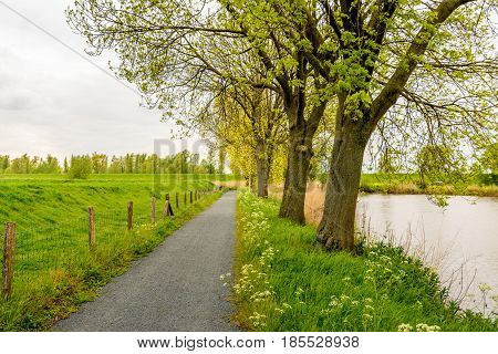 Row of tall trees with budding fresh young green leaves next to a lake and a fence in front of an embankment. It is a cloudy day in springtime.