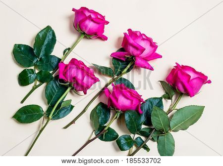 Five beautiful pink  roses on beige background