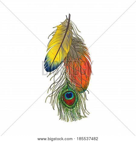 Hand drawn set of colorful bird feathers, parrots and peacock, sketch style vector illustration on white background. Realistic hand drawing of colorful peacock and parrot bird feathers