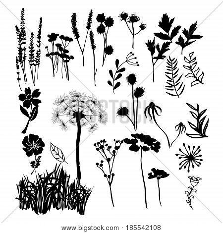 Hand drawn vector collection silhouette illustration of wild flowers herbs and grasses. Silhouettes of different plants white on black