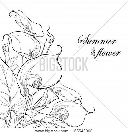 Vector bouquet with Calla lily flower or Zantedeschia in black isolated on white background. Corner composition in contour style with ornate calla and foliage for summer design and coloring book.