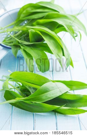 Ramson or wild garlic leaves on blue kitchen table.