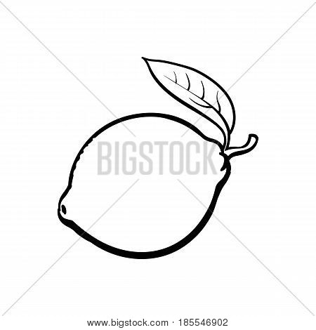 Whole shiny ripe lime with a leaf, hand drawn sketch style vector illustration on white background. Hand drawing of unpeeled round whole lime with fresh leaf